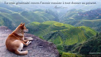 Chien dans la montagne avec vue sur rizières - Méditation - TriniYoga Paris février 2014 et citation