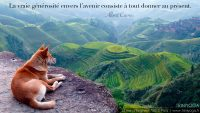 Chien roux dans les montagnes méditation au dessus des rizières - TriniYoga citation février 2014