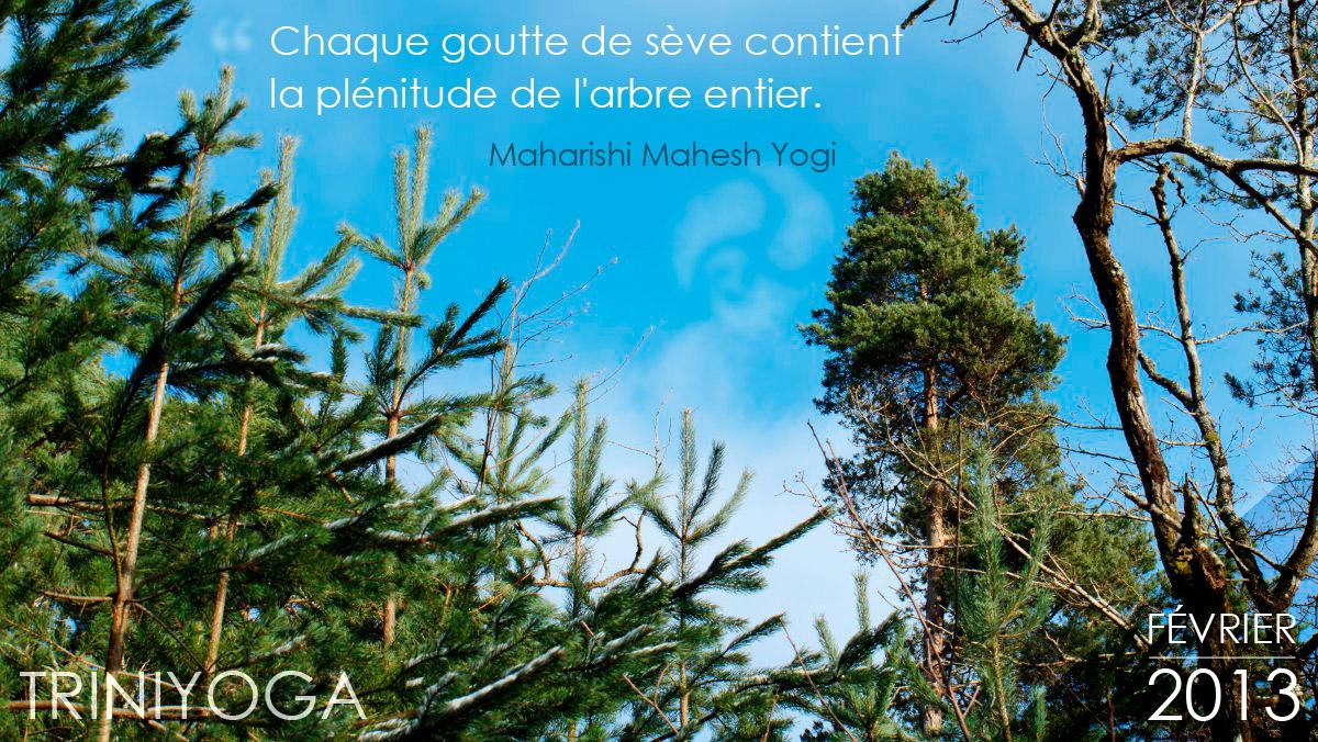 Forêt de Montigny sur Loing - Hiver, neige et pins - Citation TriniYoga