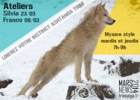 Loup blanc pose Yoga - instinct Ashtanga TriniYoga