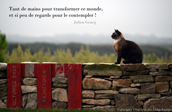 Chat sur un muret en Bretagne qui médite - Citation TriniYoga