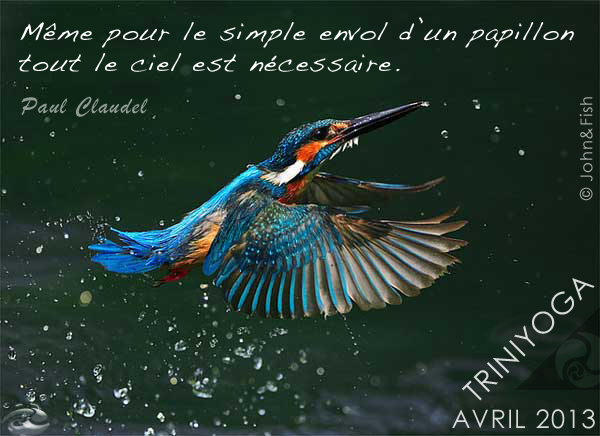 Envol King Fisher - Citation Trini Yoga avril 2013
